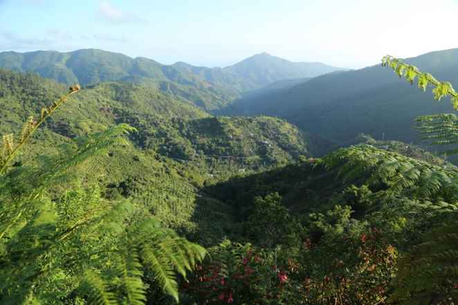 Las Blue and John Crow Mountains de Jamaica, reconocidas por la UNESCO